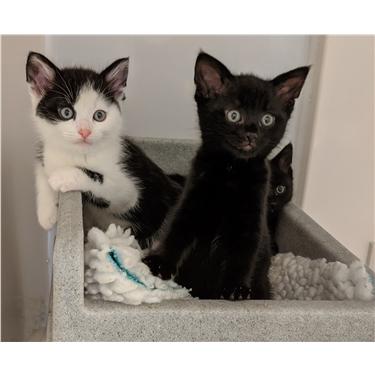 Lack of awareness about feline pregnancy could worsen summer kitten crisis