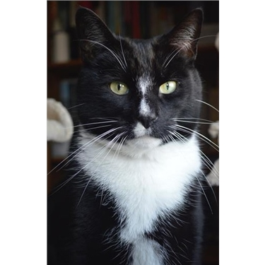 Featured Cat of the Week - Mittens