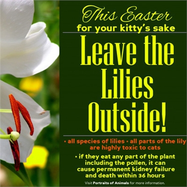 This Easter - leave the Lilies outside