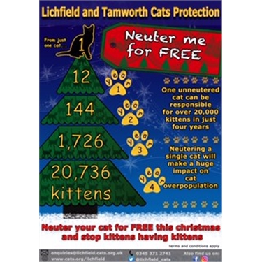 NEUTER YOUR CAT FOR FREE THIS CHRISTMAS