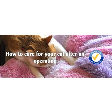 Want to know more about caring for your cat after an operation?