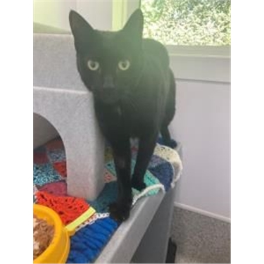 RESERVED: Kitty of the Week - Sparky!