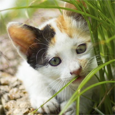 Find out how to create a feline-friendly planting scheme at RHS Malvern!