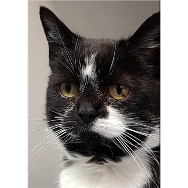Smudge is Cat of the Month