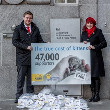 Cats Protection welcomes proposals to close legal loopholes on kitten sales