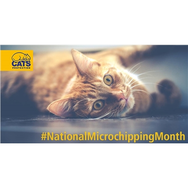 glasgow supports national microchipping month. Black Bedroom Furniture Sets. Home Design Ideas