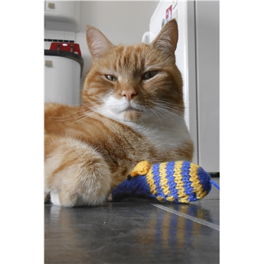 Cats Protection Urges Crafty Cat Lovers to Knit