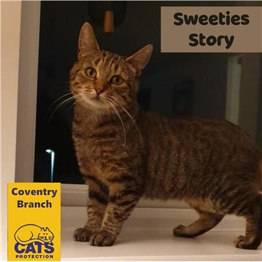 Adoption Special: Sweetie