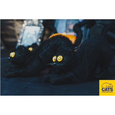 Join us for Halloween fun and games to celebrate National Black Cat day