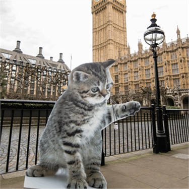 Cats Protection urge Westminster candidates to back five-year welfare agenda