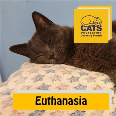 Cat Care: Euthanasia