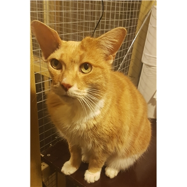Can you help gorgeous Garfield