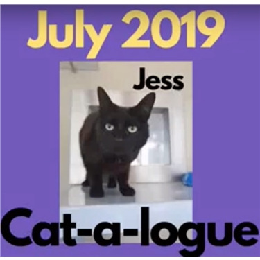 July Cat-a-logue