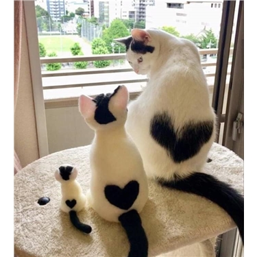 Find your perfect partner this Valentine's Day with Canterbury Cats Protection