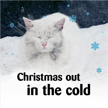Make Christmas Magical for cats in Wrexham this year