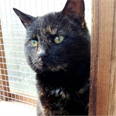 Charity hoping to reunite lost cat with owners