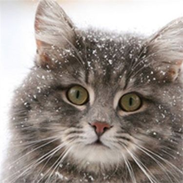 Baby it is cold outside  -  winter tips for cats