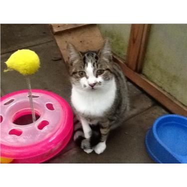 Cats poisoned in Barnstaple