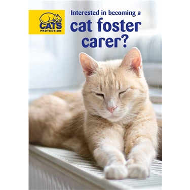 Become a Cats Protection fosterer