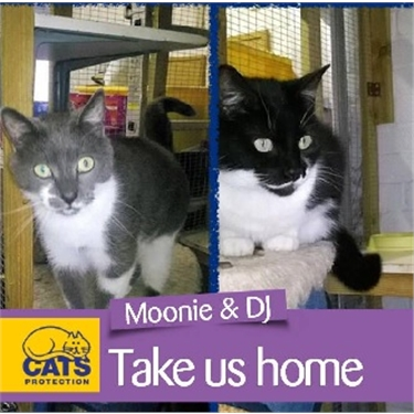 Featured Cats of the Month October 2017