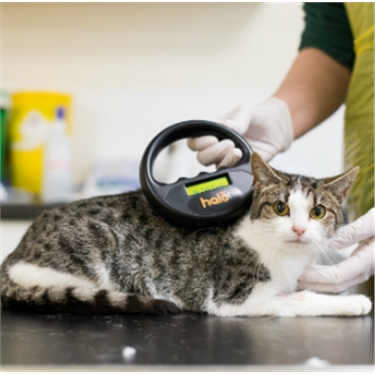 On a low income? Get your cat chipped and snipped for £5