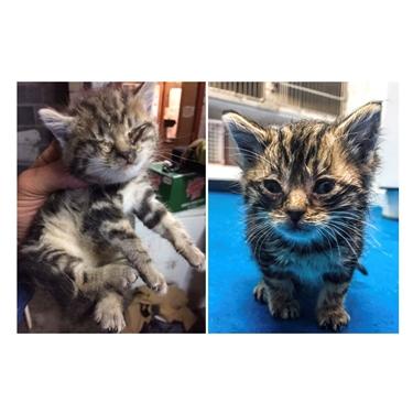 4-week old kitten rescued from inside cavity wall