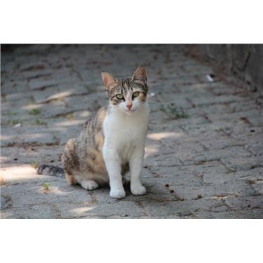 Injured Cat in Road Traffic Accident