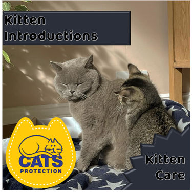 Kitten Care: Kitten Introductions to Cats