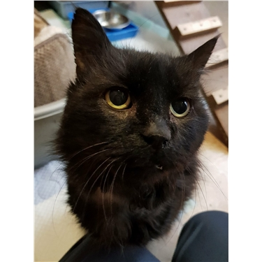 Lovely Tinker is looking for a special home
