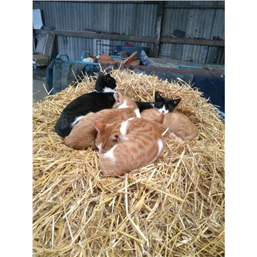 Good outdoor homes needed for feral cats & kittens.