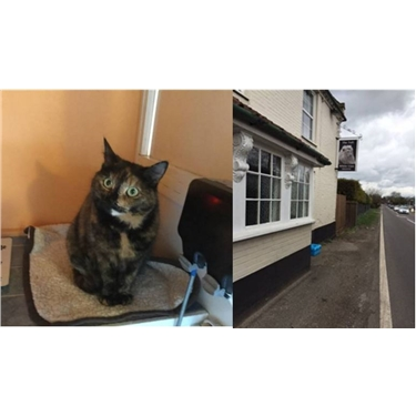 Cat dumped outside Pub