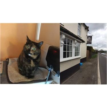Cat dumped outside Pub