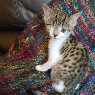 Bramble bush kitten finds happiness in her new home