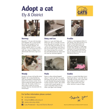 August cats for Adoption