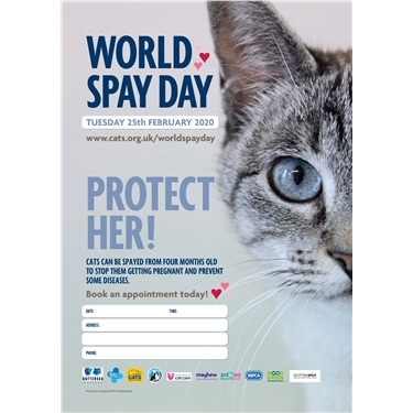 World Spay Day Offer