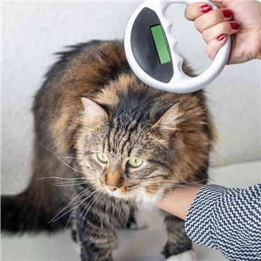 Support compulsory cat microchipping  BY 17 FEBRUARY