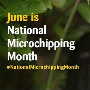 June is - National Microchipping Month