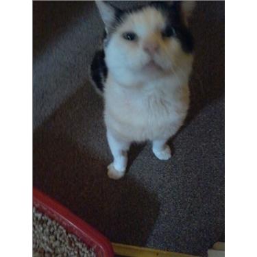Meet Wibble - our new Sponsor cat
