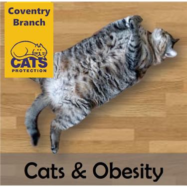 Cat Care: Obesity