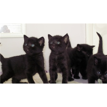 Six kittens homed today
