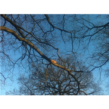 Cat Tree Rescue
