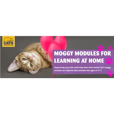 Fun Moggy Modules for learning at home