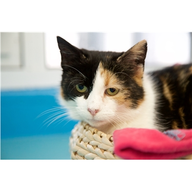 Moggy mum desperately needs a home