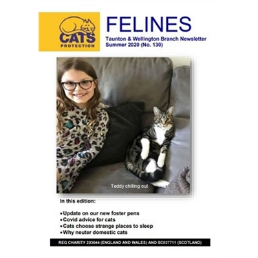 Felines Newsletter Summer 2020