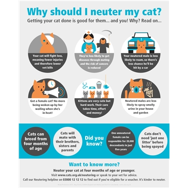 Neutering vouchers for just £5 throughout Feb/March
