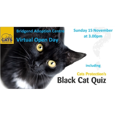 Virtual Open Day and Black Cat Quiz!