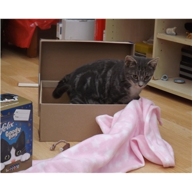 Happiness is....a shoebox!