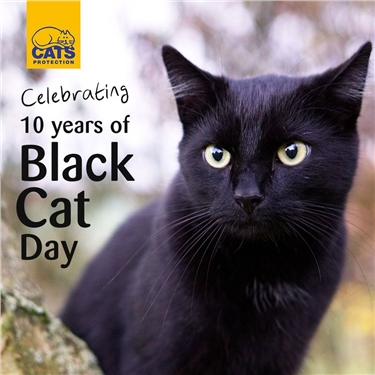 Celebrating 10 years of Black Cat Day