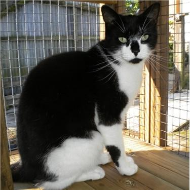 Fram & Sax Cat Care and News September 2017