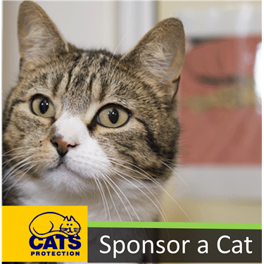 Become a cat sponsor and help change their lives
